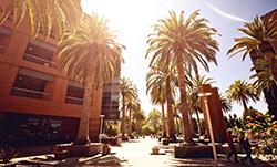 """Es ist nicht alles """"Sonnenschein"""" im Silicon Valley."""